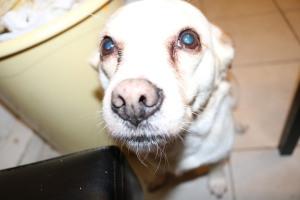 Mi perro quiere comida en Londres